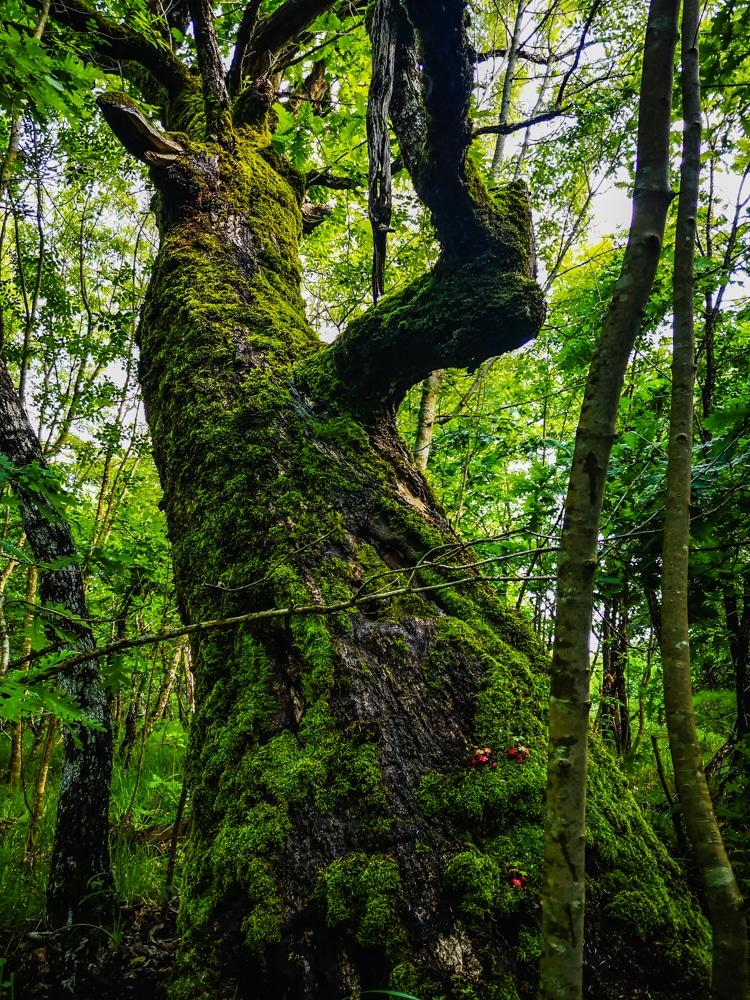 Forest Week 2020 3