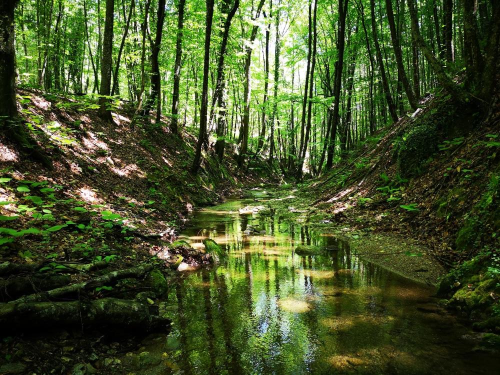 Forest Week 2020 1