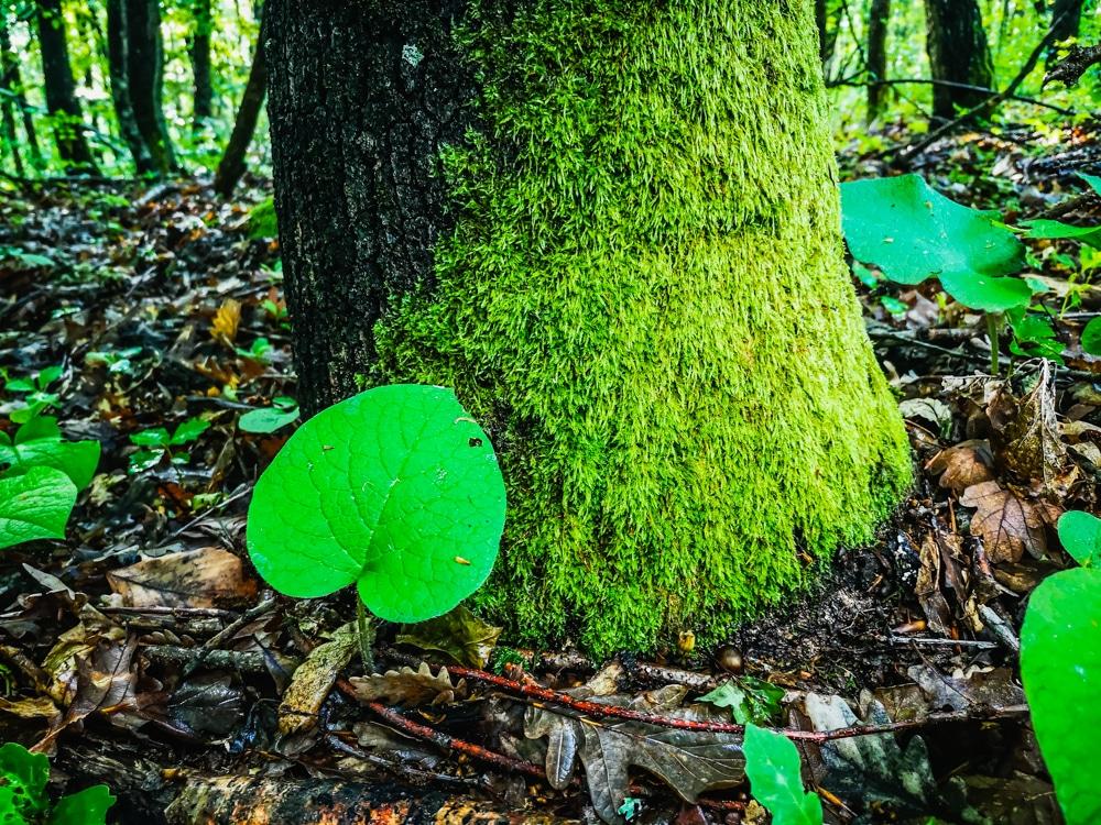 Forest Week 2020 2