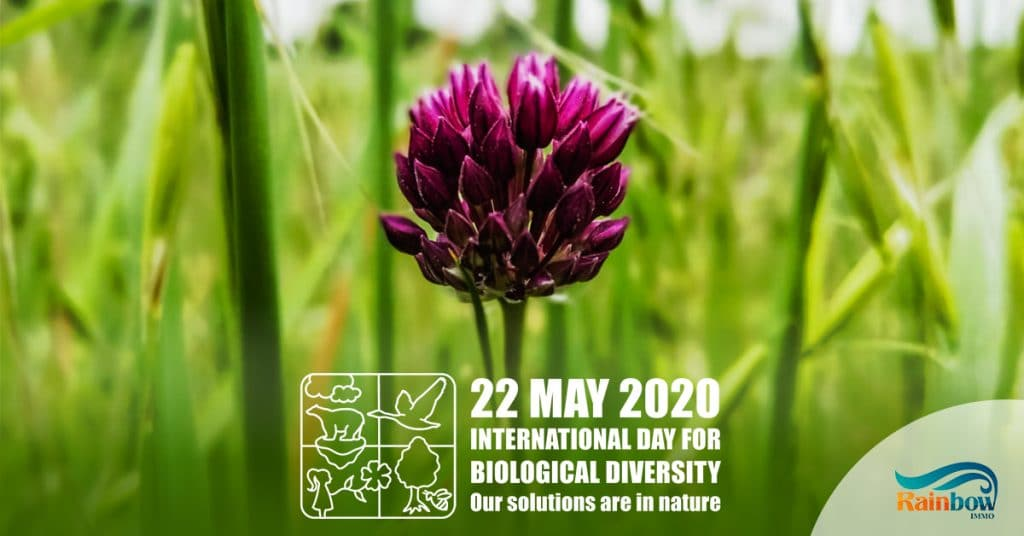 International Day of the Biological Diversity 2020 12
