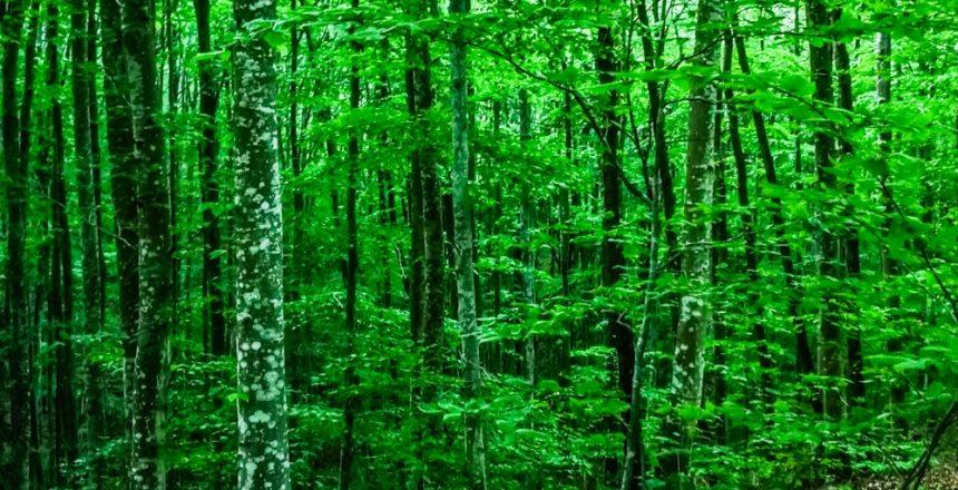 forest week 2020